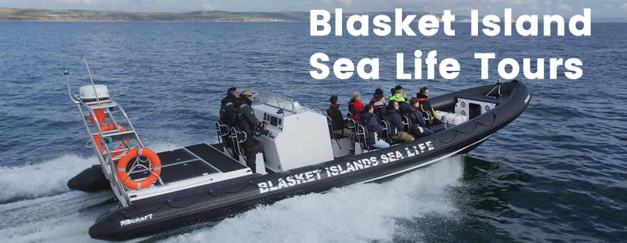 Blasket Island SeaLife RIB Tours